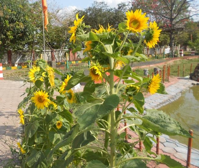 Spring in the ashram